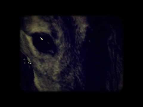 Jetstream Pony - I Close My Eyes (Official Video)