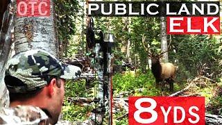 Colorado OTC Archery Elk Hunt at 8 Yards!!