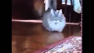 заниженная кошка