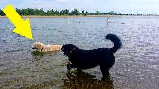 Hund sieht Tier im Wasser treiben und eilt sofort zu Hilfe!