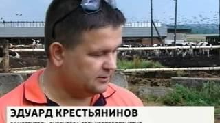 Рязанская область будет наращивать производство мяса и молока