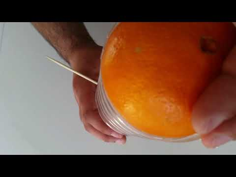 How to Make a Juice Squeezer from Plastic Bottle