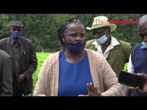 Kisii tea farmers disown directors over alleged corruption and mismanagement at the body