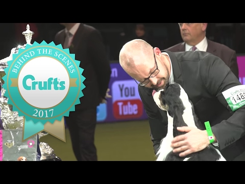 Best In Show Winner's Interview | Crufts 2017