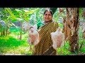Chicken Khichuri: Bengali Chicken & Traditional Khichuri Cooking Recipe by Village Food Life