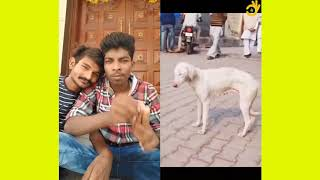 Animals Funny Video |  Viral Videos | Funny Videos | Emboss Funtime