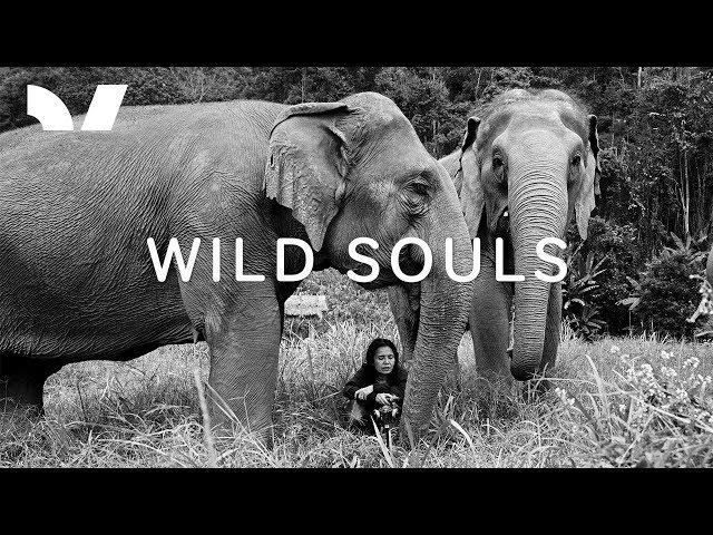 Wild Souls (VR Trailer)