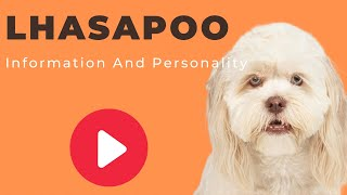 All Dogs Breeds - Lhasapoo Breed Information And Personality