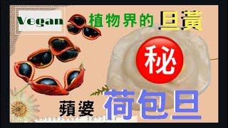 【蘋婆】鳳眼果|素食料理DIY|植物界的蛋黃|素荷包旦|員林百果山
