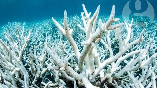 How did the Great Barrier Reef reach 'terminal stage'?