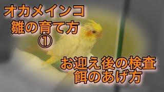 【ブログ】 https://ameblo.jp/heruman-ch/entry-12351996232.html.