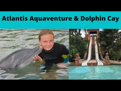 Dolphin Cay And Atlantis Aqua Adventure