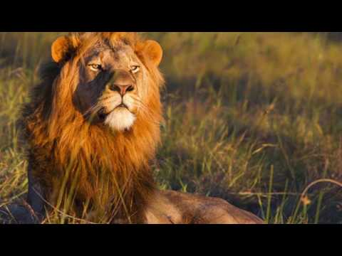 NAMIBIA 2017 Video Promo