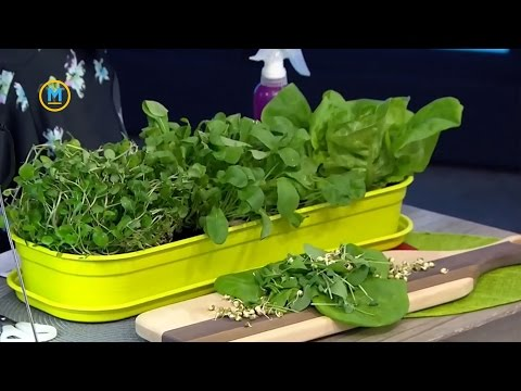 The simple steps to grow a salad indoors