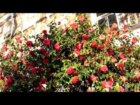13 Vincent Square Flowers