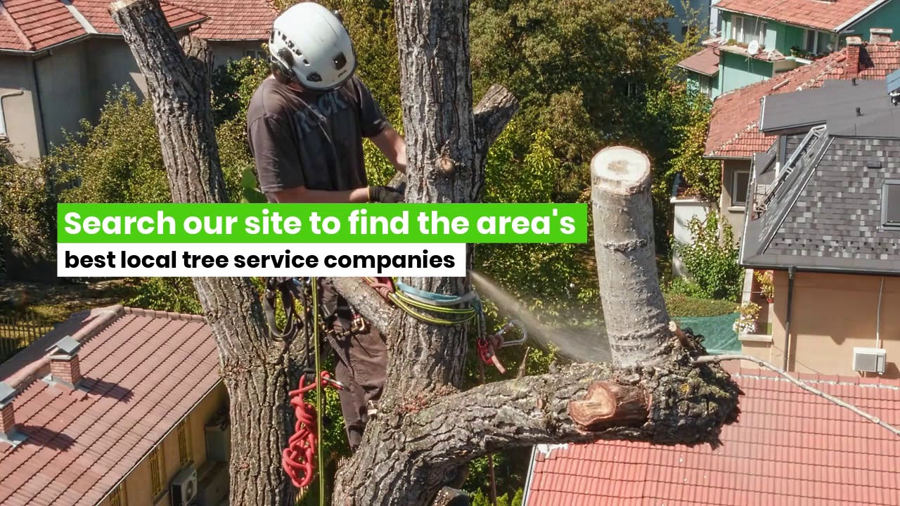 Indianapolis Tree Service And Arborists Tree Trimming Removal