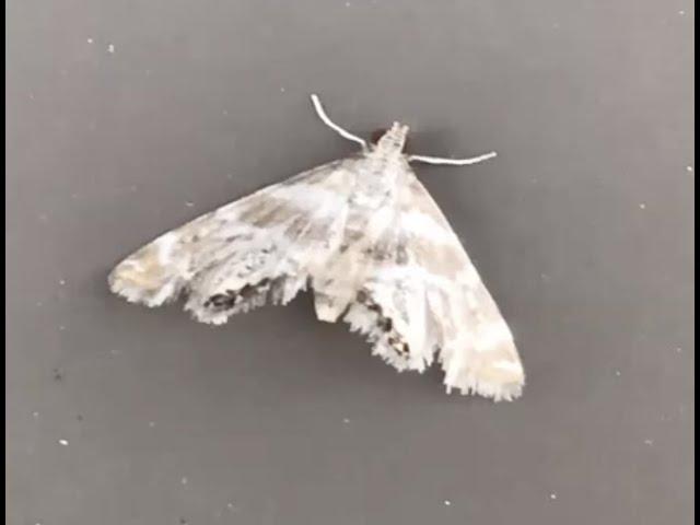 Belle Isle Nature Center | Educational Lesson: Moth Night