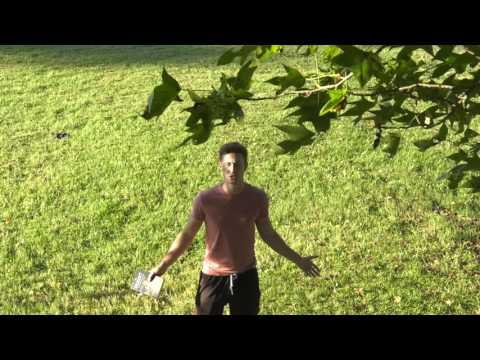 Narrative Production- Even Trees