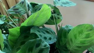 'TRIO' musical conversation  between 2 plants and guitarist Clive Wright 432hz
