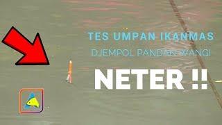 NETER PARAH..!! Mancing Ikan Mas Umpan Jempol Pandan Wangi #CARP FISHING