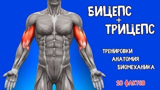 The biceps and triceps. 10 FACTS. Training, Anatomy, Biomechanics
