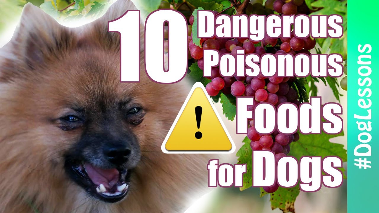 Poisonous Dogs Foods