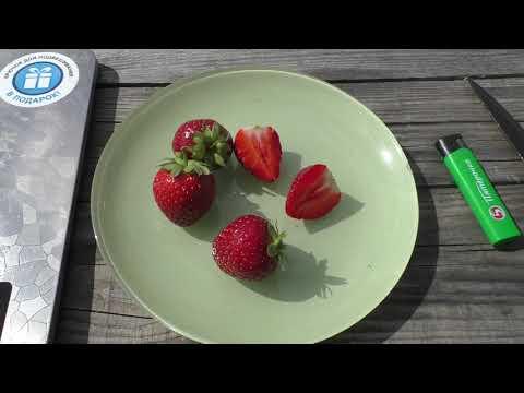 Сорт Мальвина, обзор ягоды