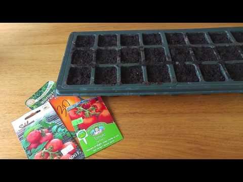 Sėjame pomidorus