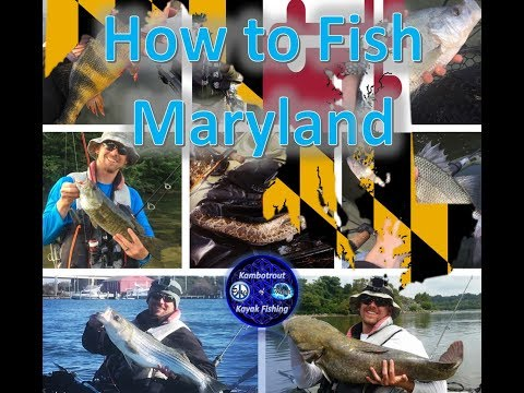 HOW To FISH MARYLAND (or Pretty Much Anywhere Else)