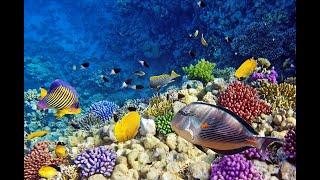 Египет Шарм эль шейх Красное море Подводный мир