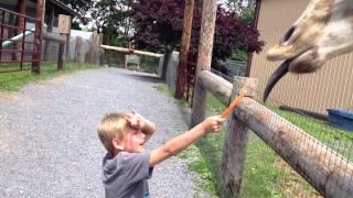 JackFeedsGiraffe