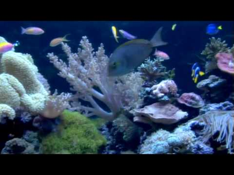 Custom Aquariums, Saltwater and Freshwater Custom ...