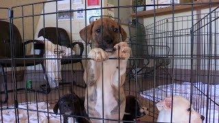 Escambia County Animal Services Transports Animals Impacted by Hurricane Michael