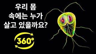 우리 몸 속에는 얼마나 많은 박테리아가 살고 있을까요? || 360 VR