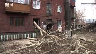 Ремонт в квартирі, знівеченої деревом, не доробили