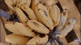 Bananenbrot | Obst im Heiligen Koran