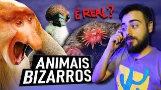 É REAL? ANIMAIS BIZARROS QUE EXISTEM DE VERDADE!