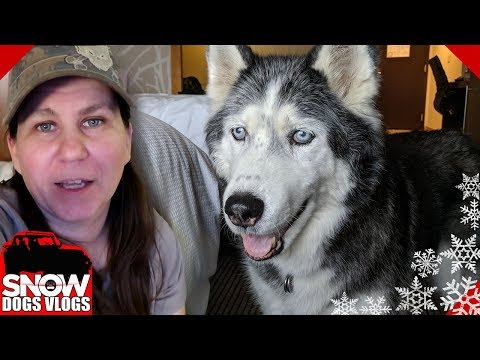 Huskies in a Hotel | The Novi Pet Expo