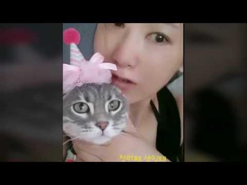 🐾  고양이 콩지 2번째 생일