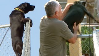 Scared Dog LEAPS Fences To Run From Noise | Cesar 911