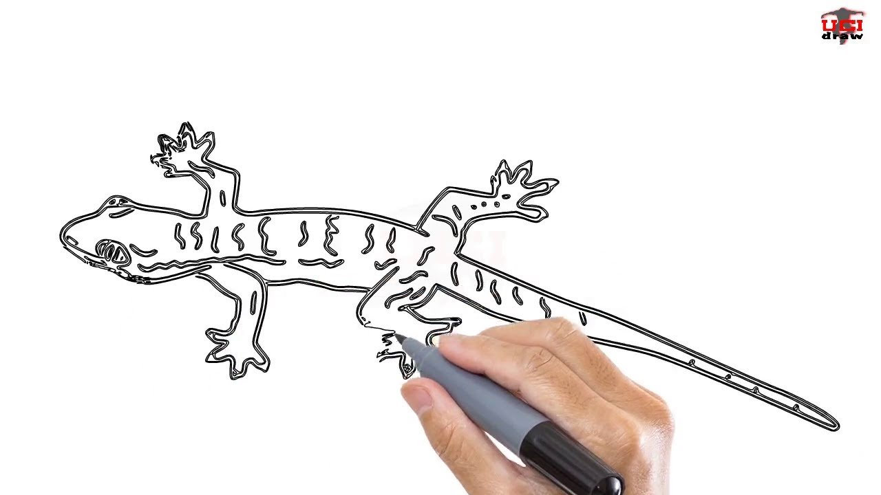 How To Draw A Lizard Easy Step By Step Drawing Tutorials For Kids