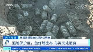 [天下财经]环渤海湿地自然保护区调查 湿地保护区:非法过度捕捞 鸟类觅食难| CCTV财经