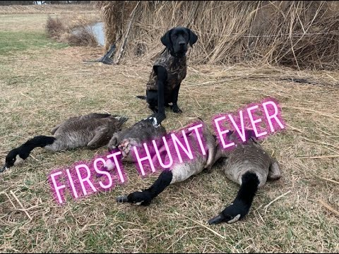 My DOG Went On His FIRST HUNT EVER!!! (late Resident MD Goose Hunt)