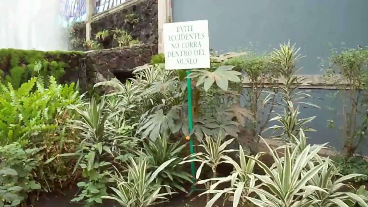 Toluca el cosmovitral jard n bot nico youtube for Jardin botanico de liubliana