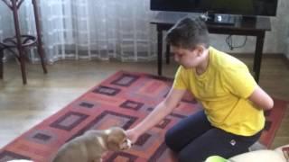 Обучение клички собаки