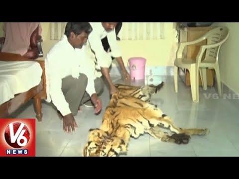 Forest Dept Officials Arrest Tiger Skin Smuggling Gang In Adilabad District | V6 News