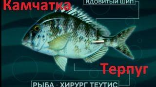 Диалоги о рыбалке / Ловля Огромных Окуней / Часть 1