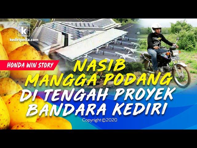 Nasib Mangga Podang di Tengah Proyek Bandara Kediri (Honda Win Story #1)