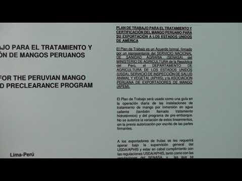 Tratamiento Hidrotérmico Para Mangos, Experiencia Peruana