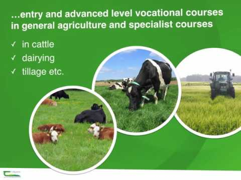 Teagasc - Teagasc Introduction
